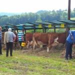 Krava vlasnika Benjamina Kotorića iz Jelaha osvojila drugo mjesto na republičkoj izložbi stočarstva